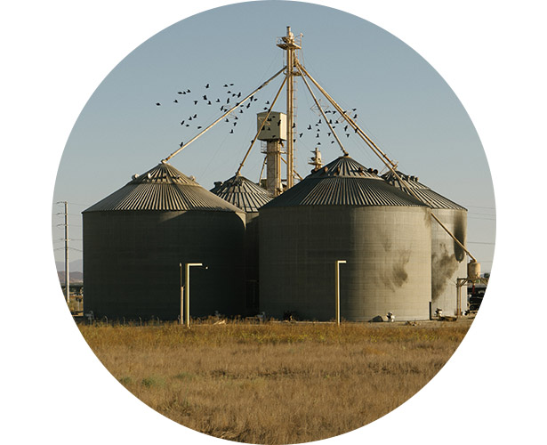A flock of birds swarming around grain mill tanks.