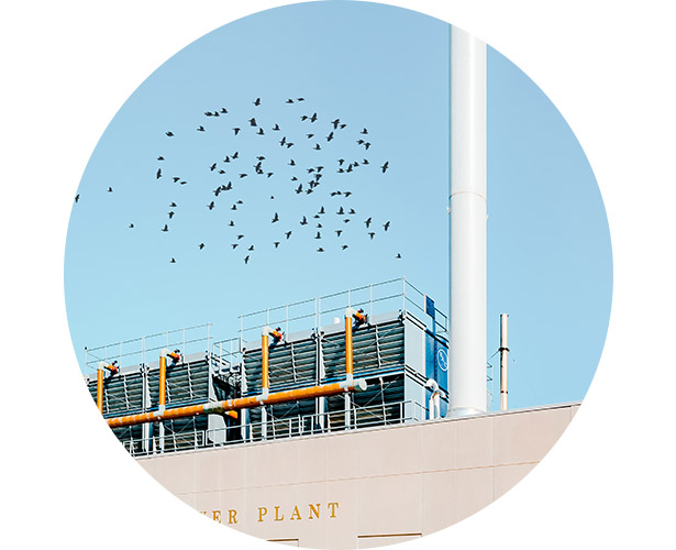 A flock of birds flying around smoke stacks at a power plant.