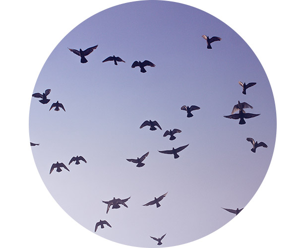 A thick flock of birds swarming outside an airport.