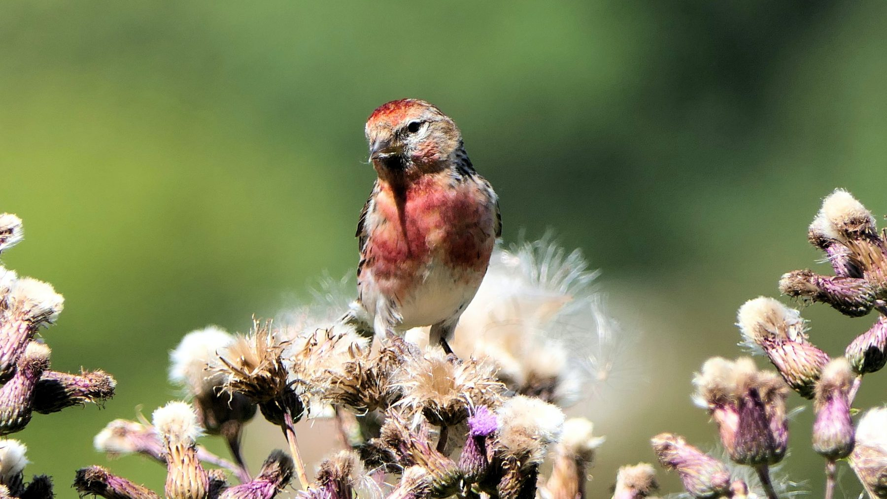 Finch Photo 3
